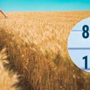 Ринок землі: українці підтримали легалізацію і референдум