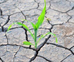 """Посухи та величезний град"": синоптик жахнула аномальним прогнозом погоди"