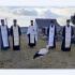 На Тернопільщині під час молитви за Героя Небесної Сотні до церкви прилетів лелека (ФОТО)