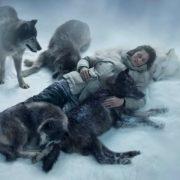 Вагітна жінка потрапила в аварію і могла замерзнути від страшного холоду, але її врятували вовки!