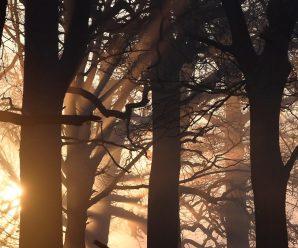 На Львівщині судитимуть двох лісівників за вирубку лісу на 600 тисяч гривень