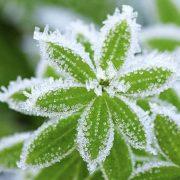 Зимові морози, снігопади та ожеледь: синоптики розповіли, які постраждають області