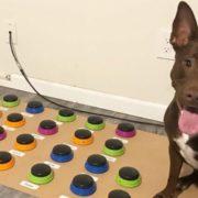 Собака вивчив 29 слів! (Відео)