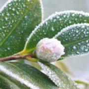 Заморозки і мокрий сніг: синоптик дав прогноз погоди в Україні до кінця квітня