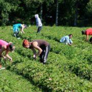 Польща знайшла спосіб, як забрати заробітчан з України