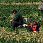 """Австрійський фермер """"ув'язнив"""" українських робітників, запідозривши у них вірус"""