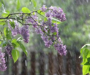 Синоптики попереджають прикарпатців про дощі та похолодання