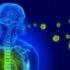 Вірусологи шоковані: з'явилися дані, як саме коронавірус захоплює тіло людини