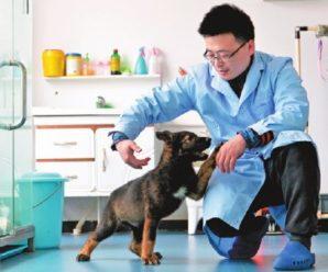 Шокуюче дослідження: собаки не гірше ПЛР-тестів можуть розпізнати інфікованих коронавірусом