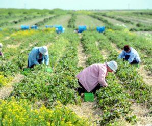 Польща відмовилася від карантину для українських заробітчан