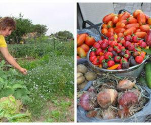 Як виростити щедрий урожай на грядці – найкращі варіанти підживлення овочів