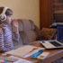 В Україні майже третина батьків задоволені дистанційним навчанням дітей